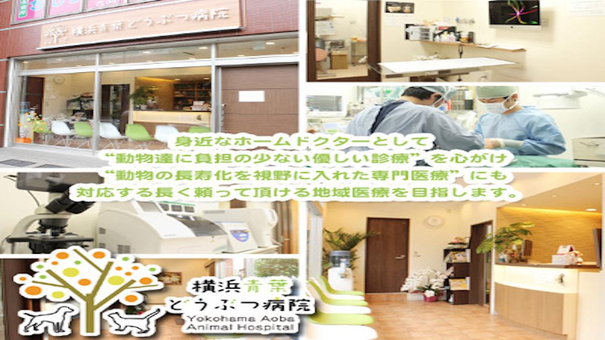 横浜青葉どうぶつ病院