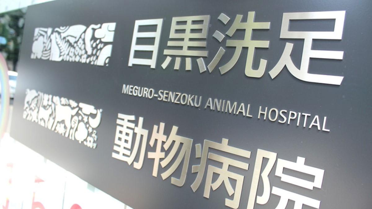 目黒洗足動物病院