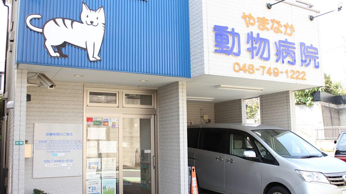 やまなか動物病院猫写真