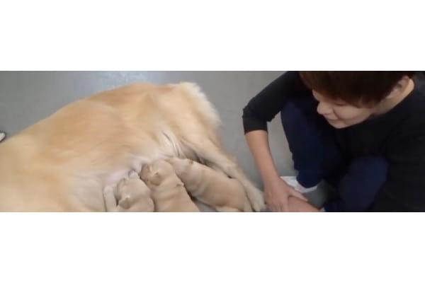 ロンドベル動物診療所(往診専門)