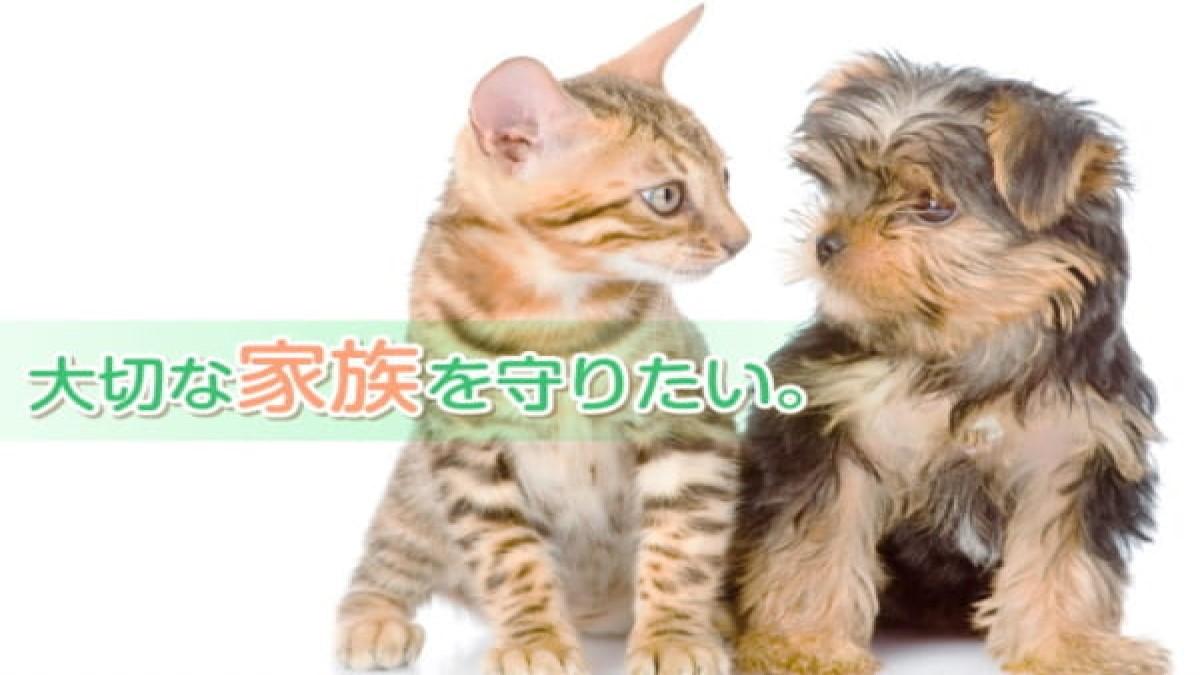 あさ川動物病院