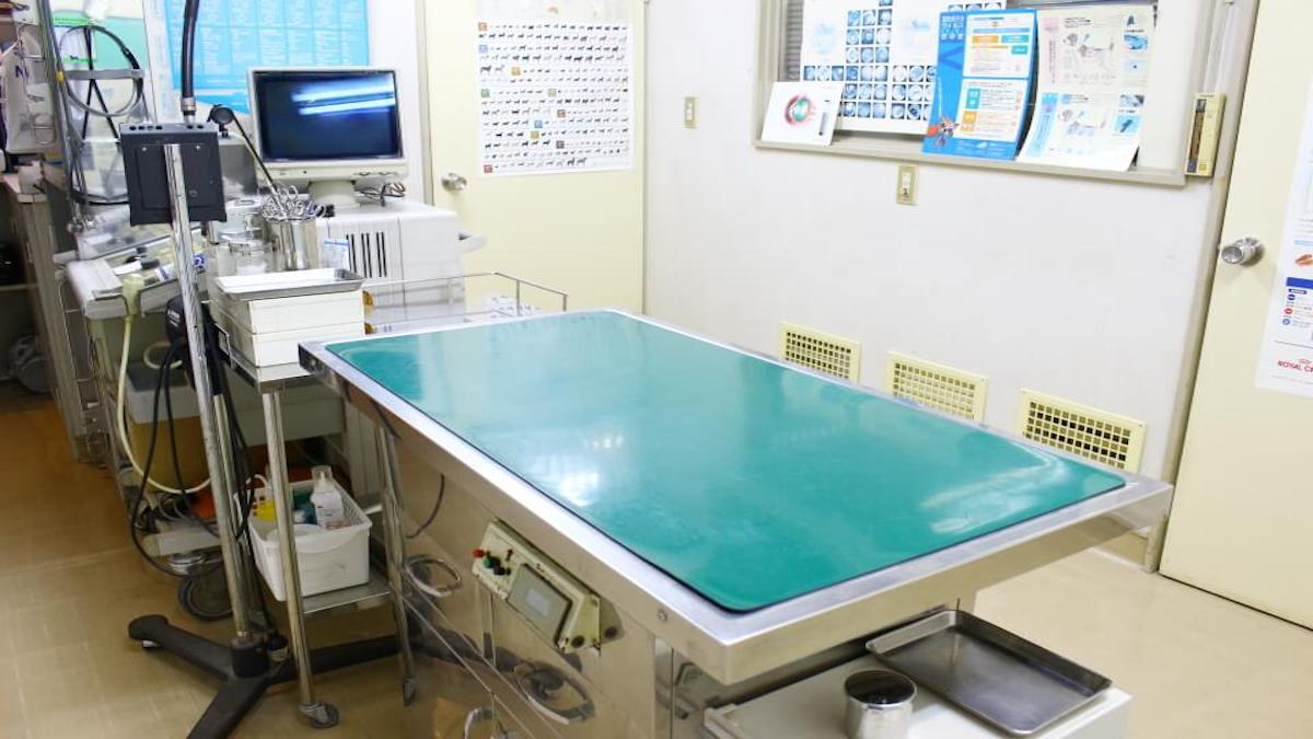 マツモト動物病院
