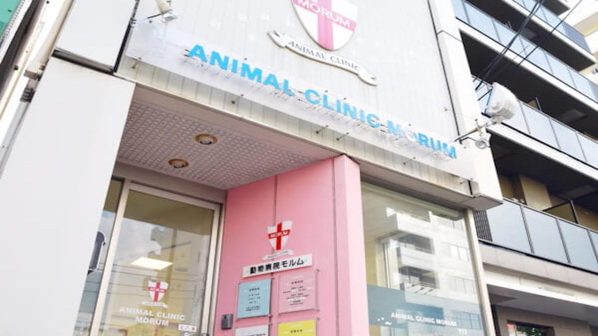 動物病院モルム