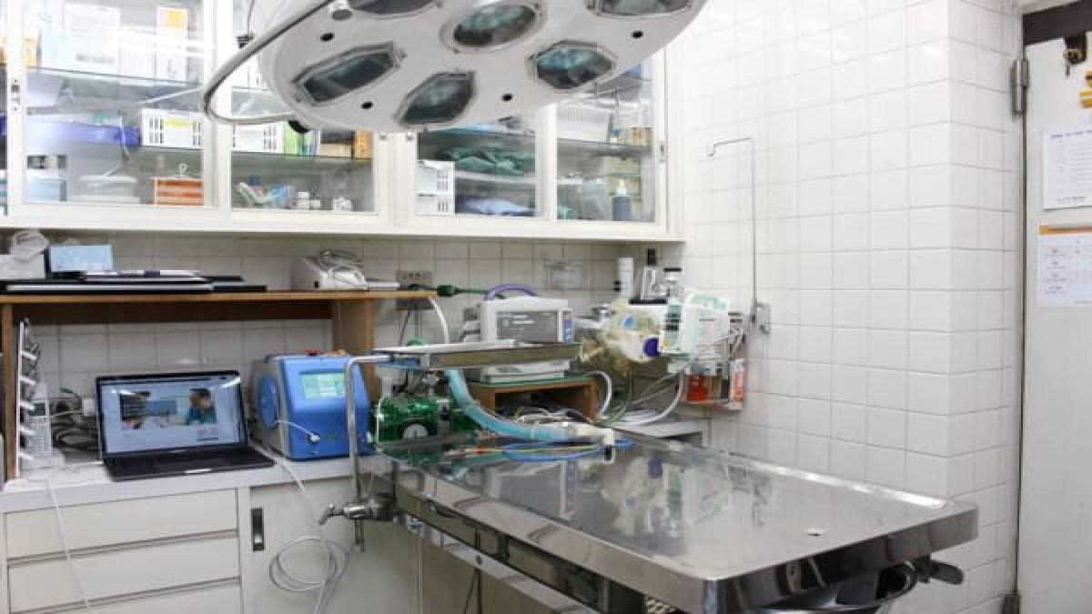 麻布動物病院