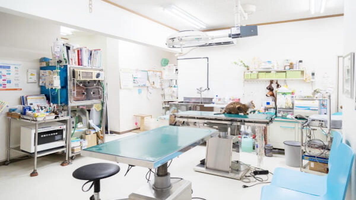 東山動物病院