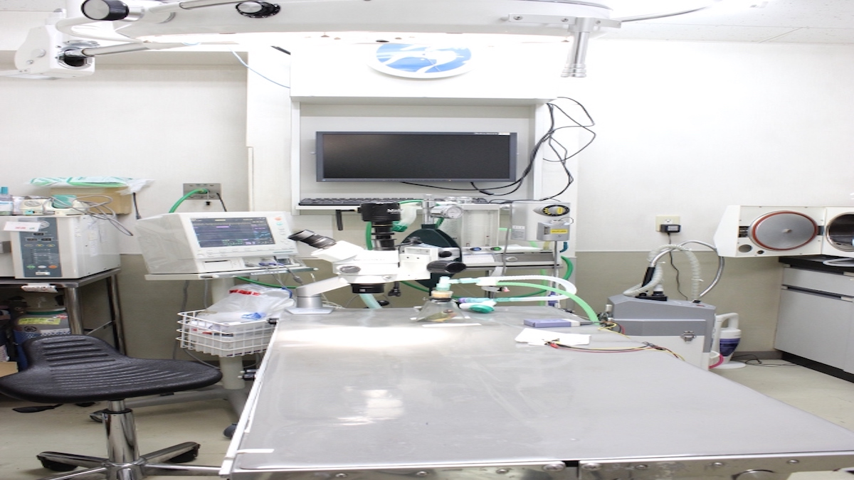 水上犬猫鳥の病院