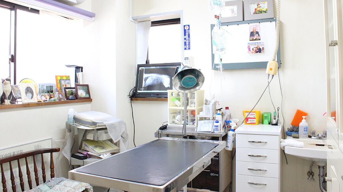 せじま動物病院鍼灸写真