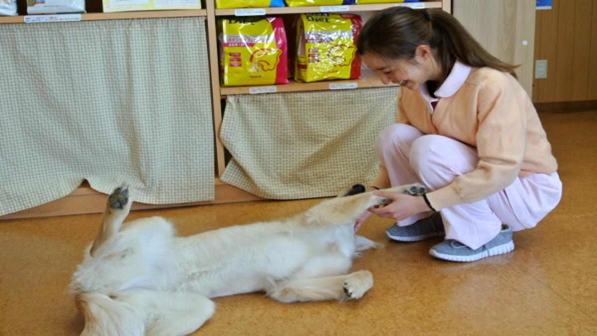 津北動物病院