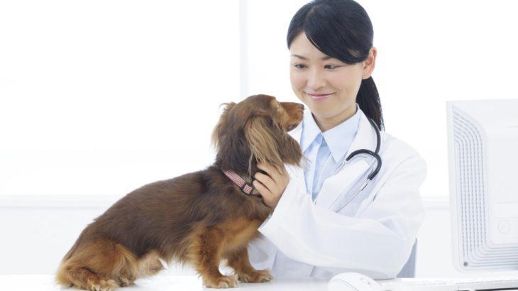 川越市の土日診療もやっているおすすめ動物病院6選!