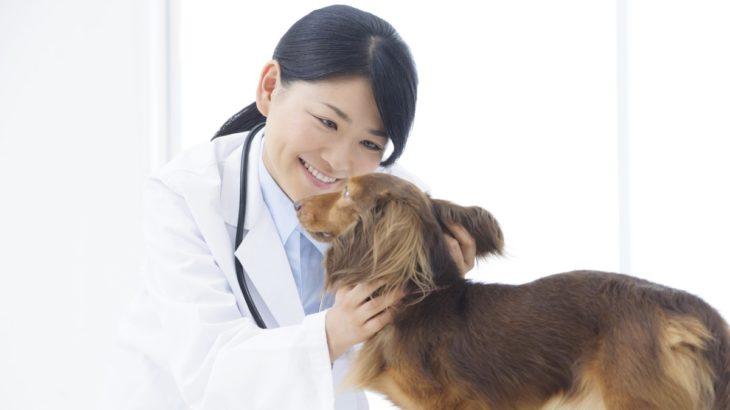 さいたま市中央区で人気の動物病院すぐにネット予約、電話予約できる人気の動物病院をご紹介