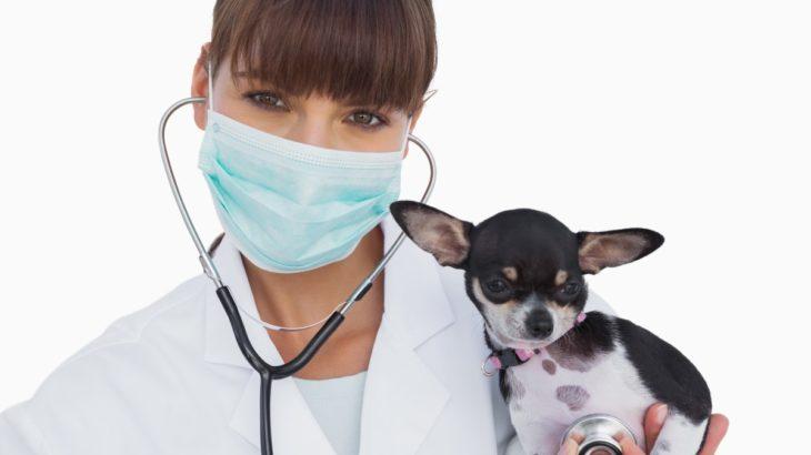 ネット予約、電話予約できる相模原市緑区で人気の動物病院をご紹介します