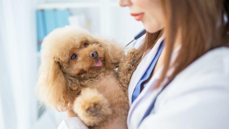 横浜市港南区でネット予約できる動物病院4選!夜間診療対応