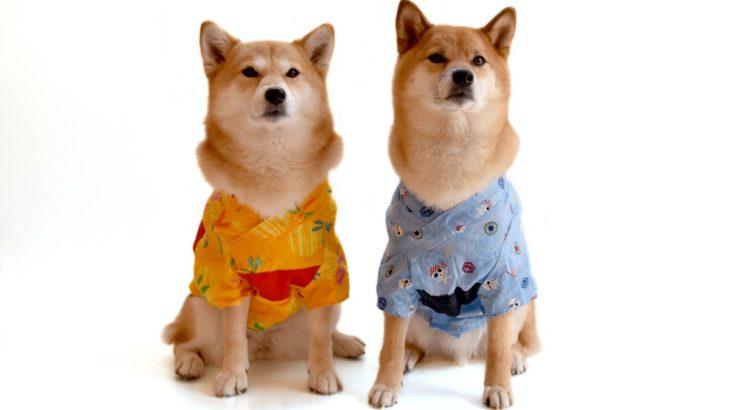 三重県四日市市で避妊・去勢手術が受けられる動物病院【2選】