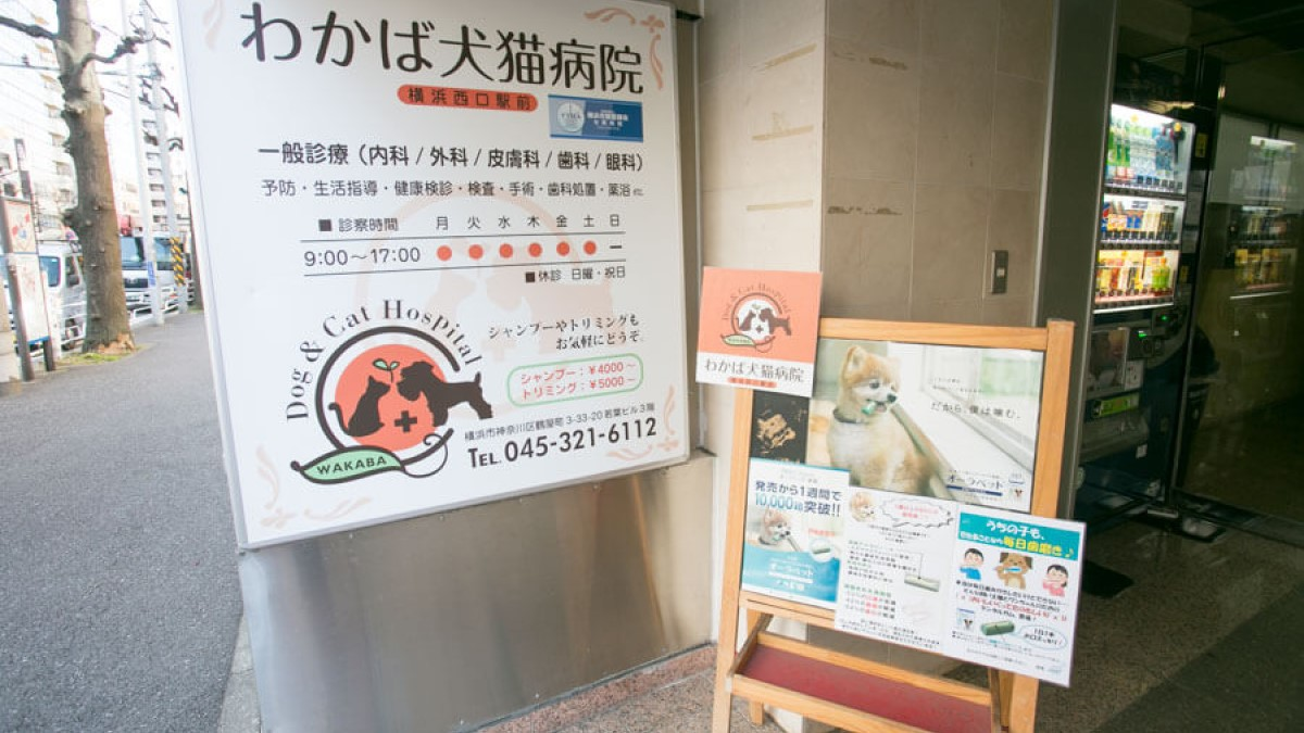 わかば犬猫病院 横浜西口駅前